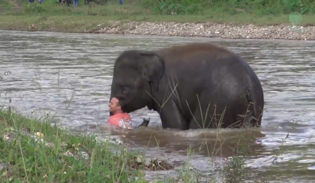 Nothing is getting in between this little elephant and her favourite human.