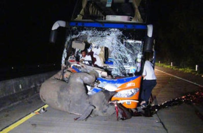 Video of Speeding Bus Killing Young Elephant on Lampang-Chiang Mai Highway Goes Viral