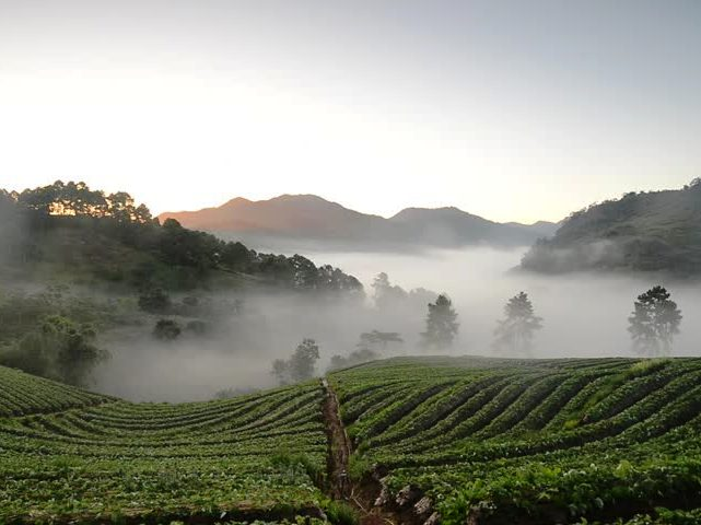 Cold Spell is Coming, Signalling the Start of High Season in Chiang Rai