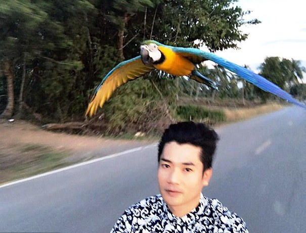 VIDEO: Escaped Macaw Parrot Races Man on Scooter in Chiang Rai