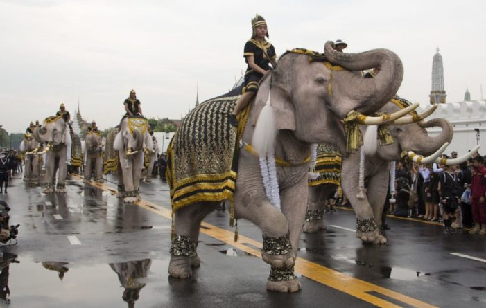 White Elephants, Mahouts in Thailand Pay Respects to Late King at Grand Palace