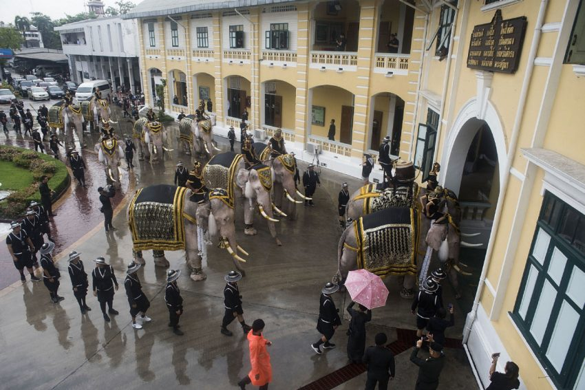 Some 200 mahouts leading nine, specially chosen white elephants and two white-painted elephants arrived at the palace from around the country.  (Borja Sanchez Trillo)