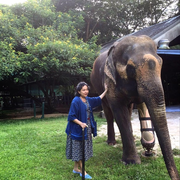 Donations Pour in to Save Elephant Foundation in Lampang, Thailand