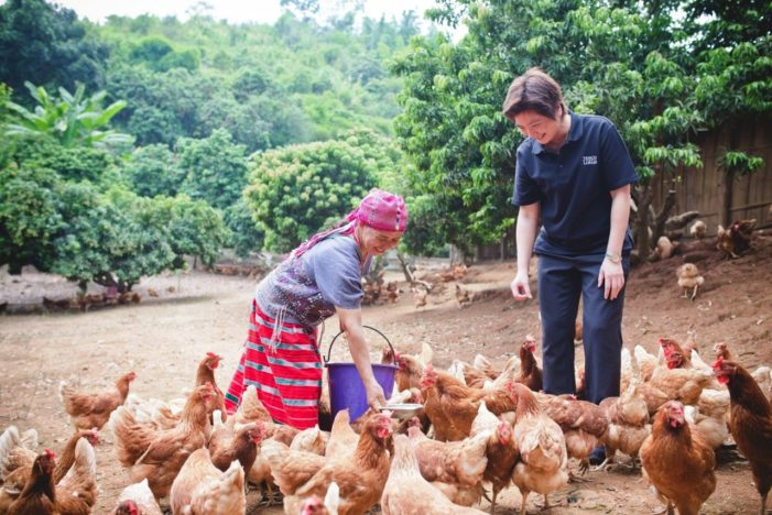 Teso Lotus Goes Organic, Partnering with Hilltribe Families in Chiang Rai