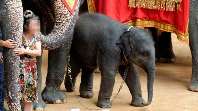 Animal Protection Groups Say Elephant Tourism is 'Fuelling Cruelty'