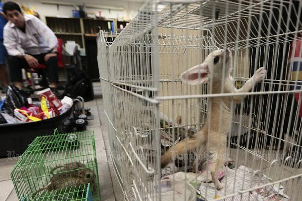 Japanese Man Arrested at Suvarnabhumi Airport for Trying to Export Protected Animals