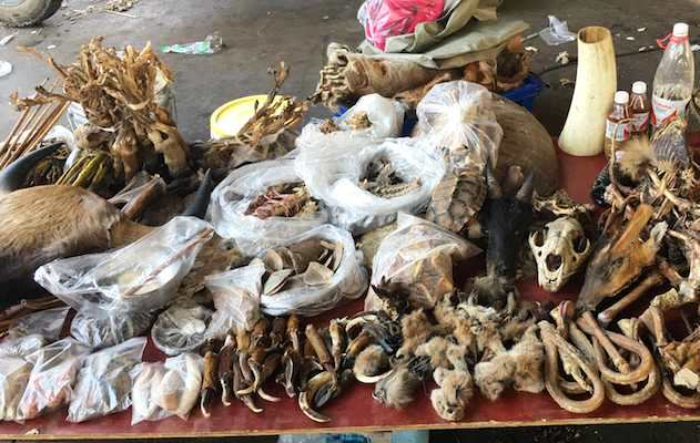 Golden Triangle is Under Spotlight as illegal Wildlife Trade Hub