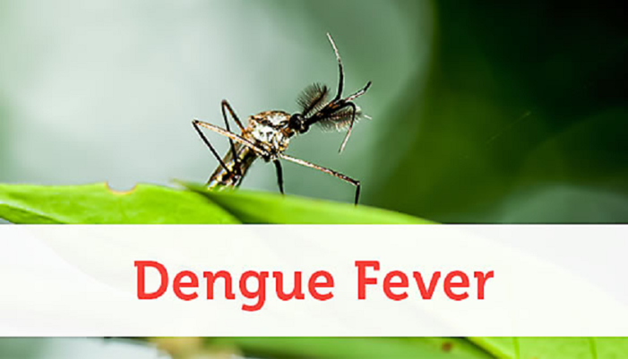 Fight to Eradicate Dengue Fever Faces Another Setback