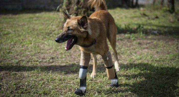 "Paralympics Sprinter Legs Give Maimed ""Thai Dog Cola"" a New Lease on Life"