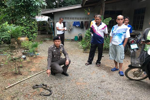 Nine Year-old Thai Girl Dies after Being Bitten by Cobra While Sleeping