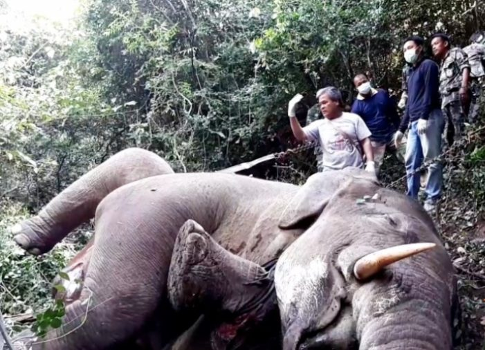 Police, Soldiers and Wildlife Officials Hunt Killer of Wild Bull Elephant in Kui Buri National Park