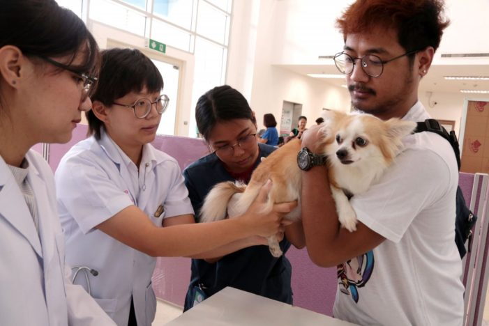 Thailand's Food and Drug Administration Blames Substandard Vaccines on Rabies Epidemic