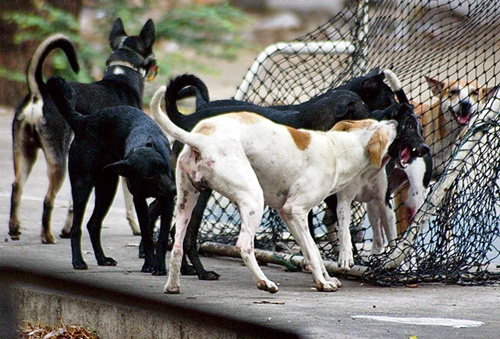 In the Wake of Recent Rabies Outbreak, Thai Government Looks to Draft Law Governing Domesticated Animals
