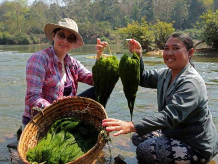 Chiang Rai's Chiang Khong District Organizes Activity to Promote Mekong River Weed