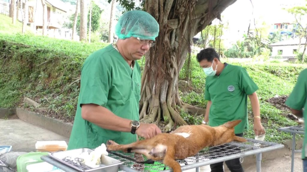 Livestock Officials Rush to Vaccinate Dogs and Cats Against Rabies in Chiang Rai