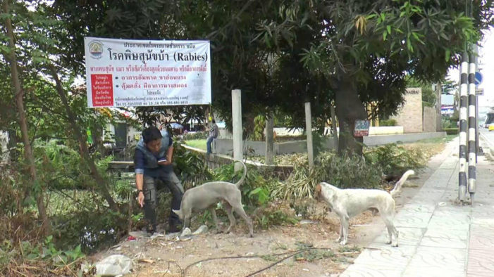 "Chiang Rai One of 13 Provinces Declared ""Rabies Red Zones"""