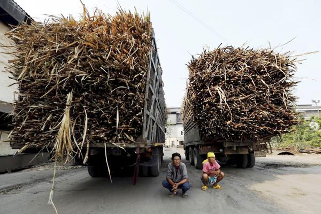 Thailand Cuts 500,000 Tons of Raw Sugar Exports as Prices Plung