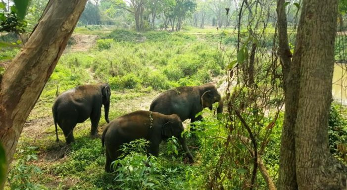 A Better Way Forward for Elephant Tourism in Northern Thailand