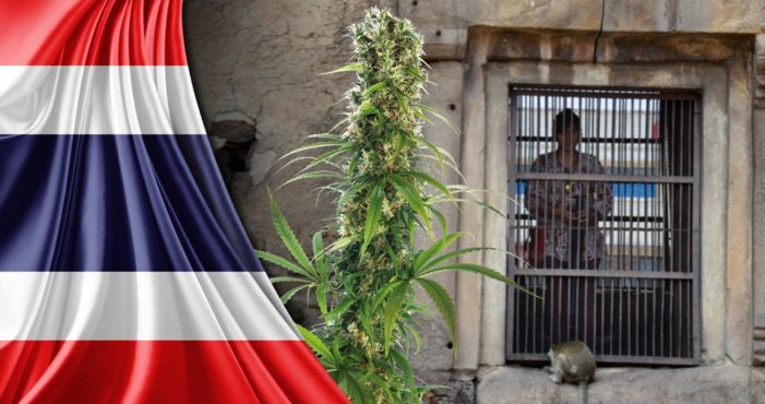 Bill to Reform Thailand's Marijuana Laws Passes First Reading by a Landslide