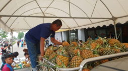 Chiang Rai Governor Says Measures Being Taken to Deal with Oversupply of Pineapple