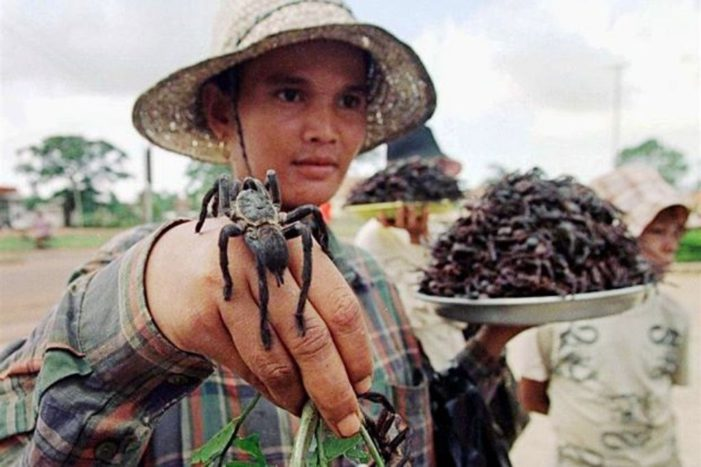 Tarantulas Cambodia's Disappearing Delicacy Due to Deforestation and Over-Harvesting