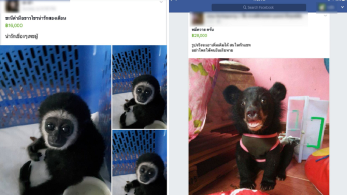 Watchdogs Exposes Unregulated Animal Trade on Facebook in Thailand