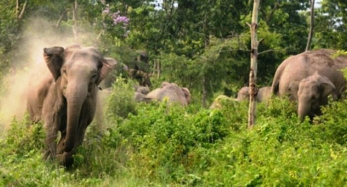 Wild Elephants Stomp Villager to Death in West Central Thailand