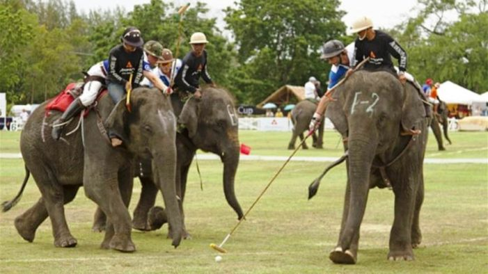 IBM Withdraws Sponsorship of King's Cup Elephant Polo Tournament Over Animal Cruelty