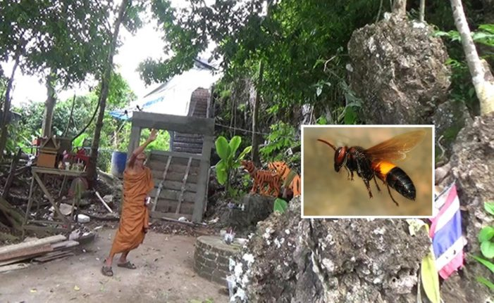 Mother and 4 Year-old Son Stung to Death by Hornets in Southern Thailand