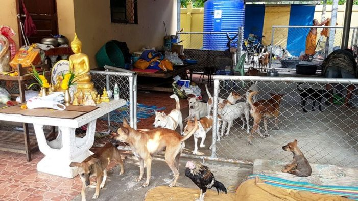 Pets Need to be Registered to Control the Spread of Rabies