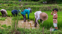 Thai Government Pushes Reform in Agriculture Sector