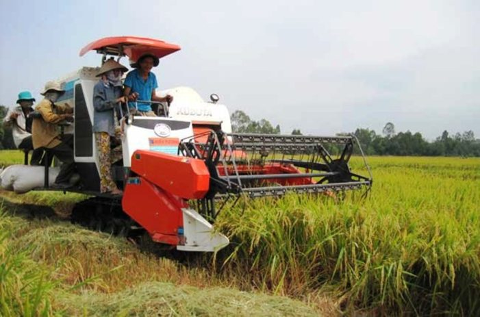 Thailand's Commerce Ministry to Link Crops with Foreign Clients