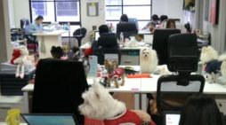 Workplaces Embracing Pets in the Office in Thailand