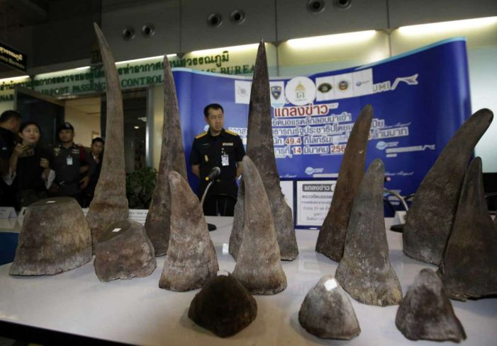 Bangkok Court Gives Four-Year Prison Sentences Given to Thai Rhino Horn Smugglers