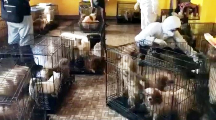 Dozens of Dogs Rescued from Mae Sai Breeding Farm