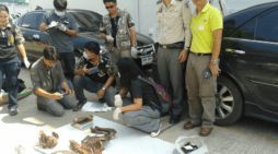 Thai Police Investigation Reveals Cross Border Tiger Syndicate