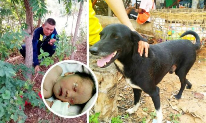 Disabled Dog Saves Infant Buried Alive by 15 Year-Old Mother in Northern Thailand
