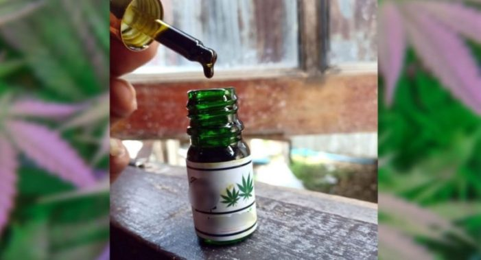 Cannabis Oil Faces Hurdles Before It's Fully Legal in Thailand