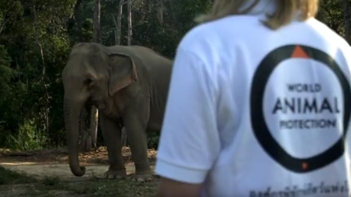 Truly Elephant Friendly Camp Opens in Northern Thailand