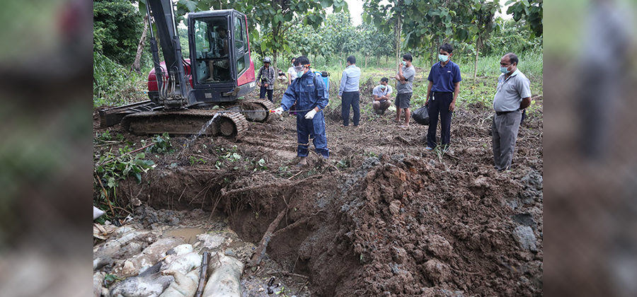 African Swine Fever Fears After 2000 Pigs Culled Across the Border from Chiang Rai, Thailand