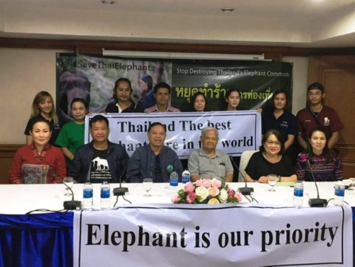 Elephant Camp Operators Defend Themselves Against Foreign Media