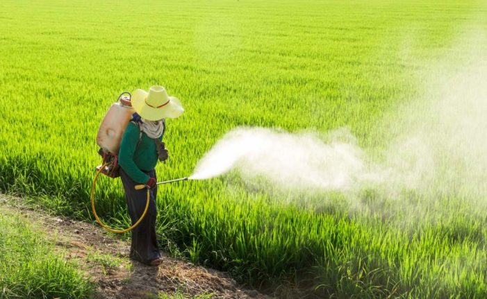 Northern Thailand Farmers are Reluctant to Stop Using Toxic Pesticides