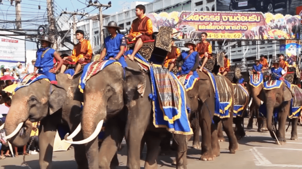 Over 160 Elephants Join Annual Surin Elephant Round-Up
