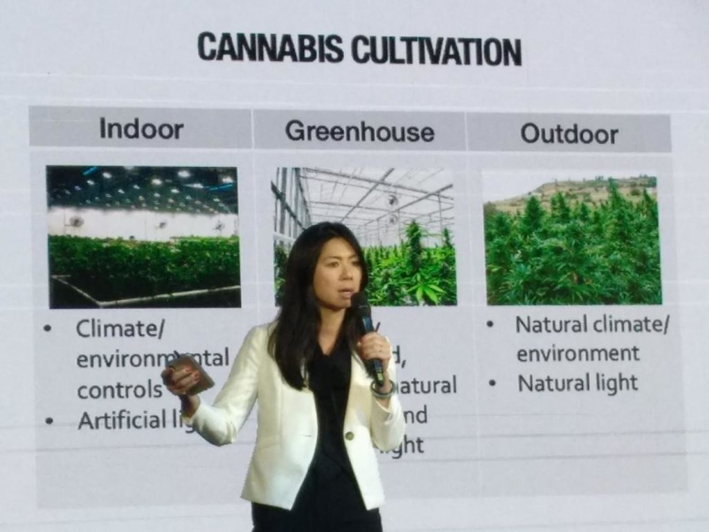 Lawmakers in Thailand Promoting Cannabis as a Cash Crop for Farmers