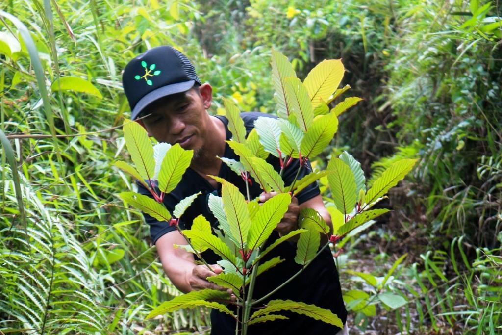 Kratom, Narcotics List, Thailand