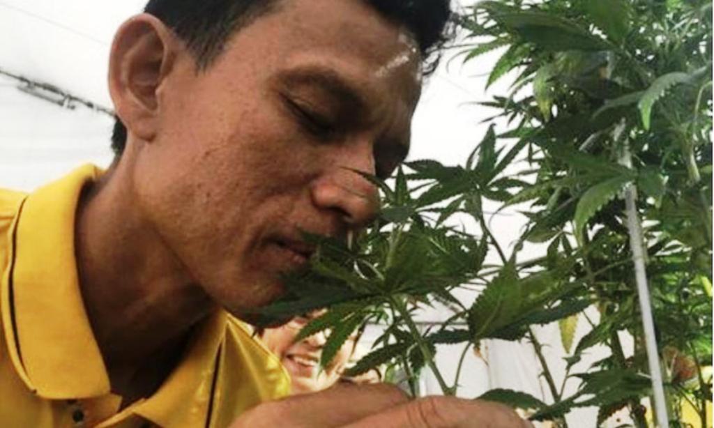 Medical marijuana thailand