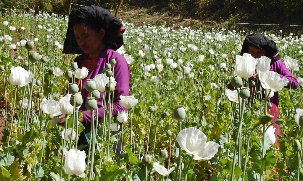 Opium Myanmar