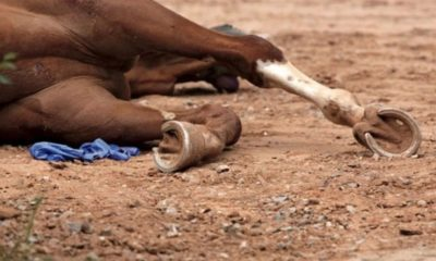 African Virus Kills 42 Racehorses