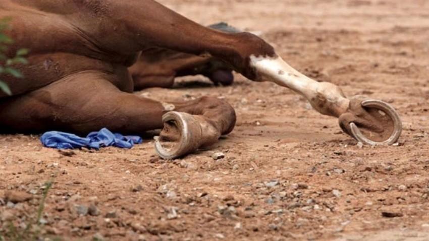 African Virus Kills 42 Racehorses