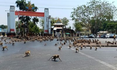 Monkeys, Thailand, Lopburi